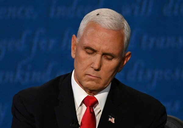 fly on mike pence head
