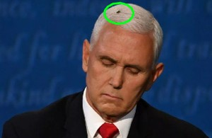 Mike Pence Fly Costume
